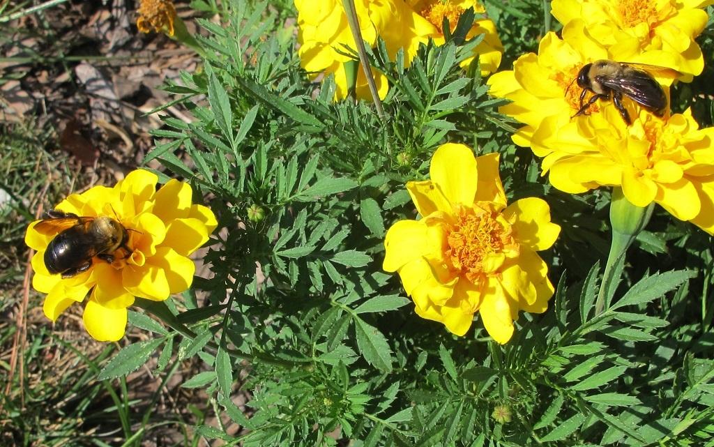 The Farm In My Yard Kim Carlisle S Tips Toward Better Gardening